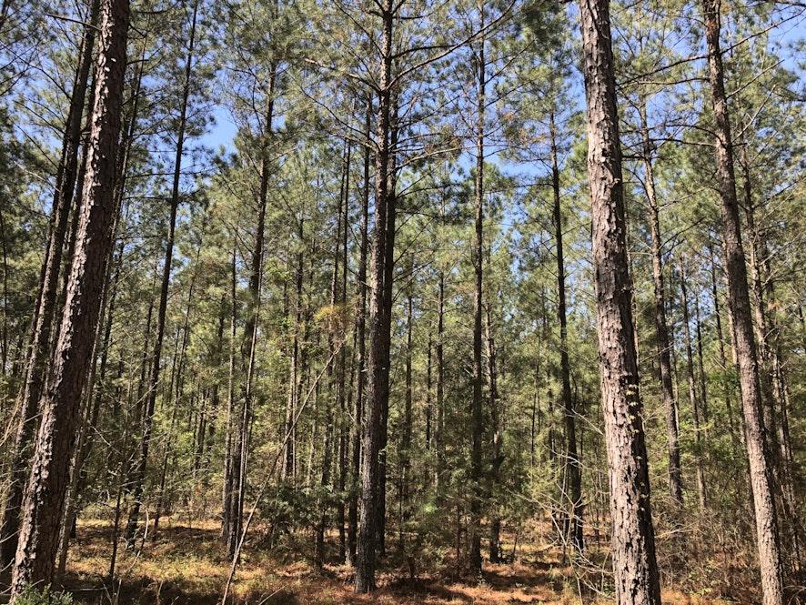 Anson County, North Carolina, ,Land,Active,1025