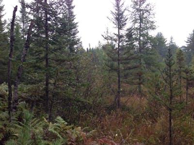 N. Peavy Pond 40 - Camp 5 Rd