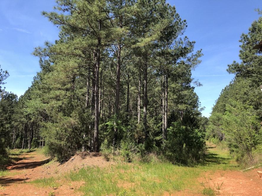 Fairfield County, South Carolina, ,Land,Active,1028
