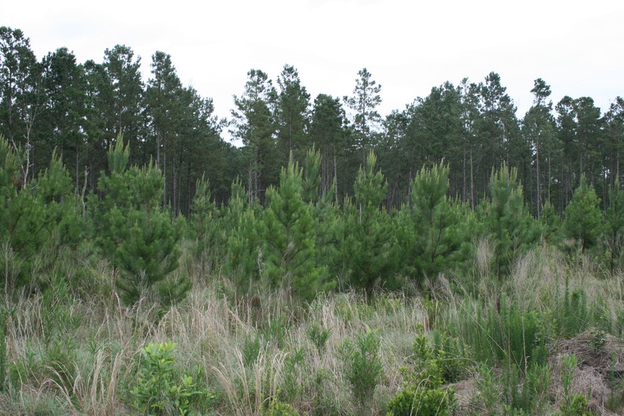 Onslow County, North Carolina, ,Land,Active,1030