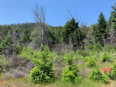 West Grave Creek