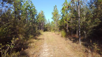 Parrish Road Timberland