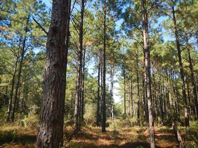 Lusk Timberlands