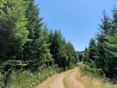 Bear Creek - Douglas