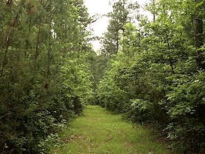 Parson Timberlands