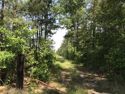 Goodrich-Simmons Timber Tract