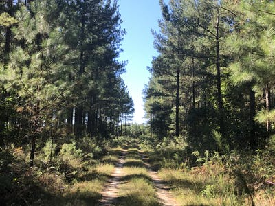 Beaver Creek Timberlands