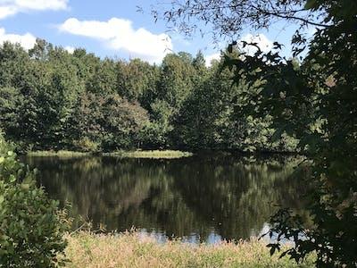 County Drive Farmhouse Pond and Acreage