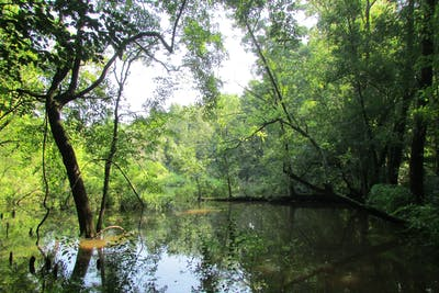 Smith Tract
